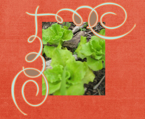 Cute lettuce