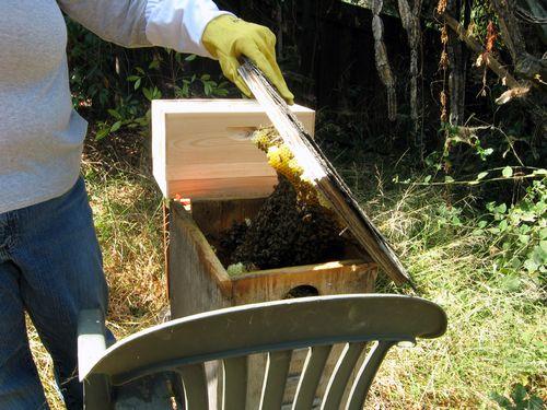 Open bees