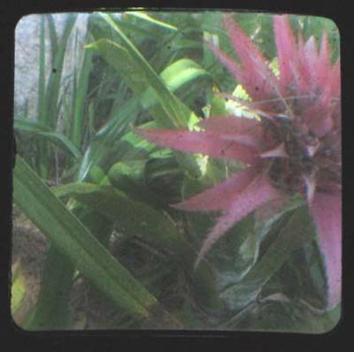 Cactus_ttv_color_adj_2