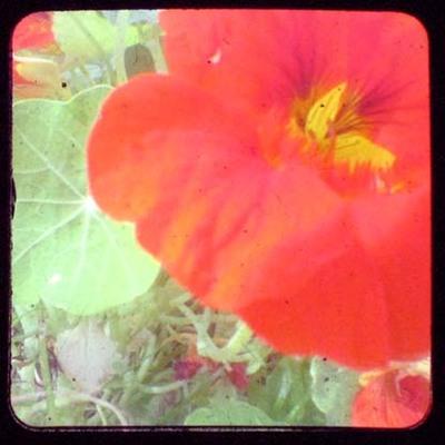 Ttv_nastur_color_adj_2