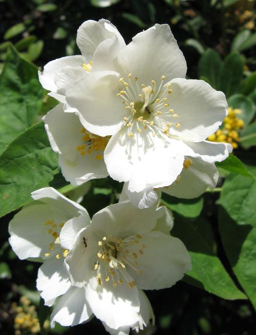 Sakis_flower